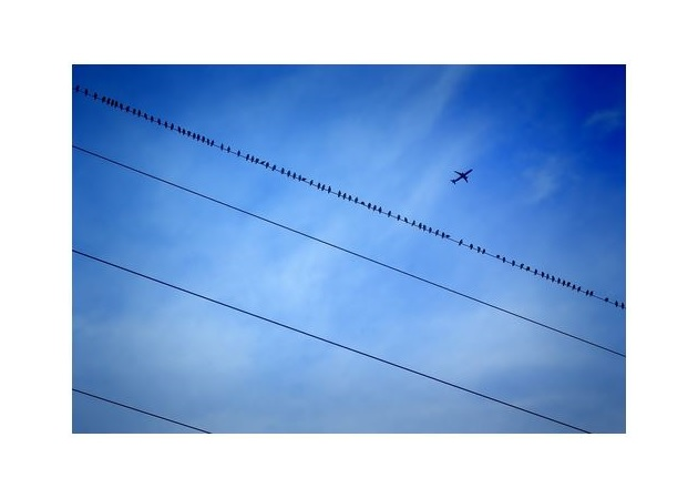 Fig. 1 Birds are immune to electric shock as long as they are not part of the electrical circuit. Image courtesy of Pixabay