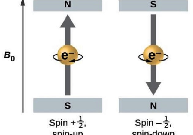 Electrons with spin values of ½ and -½ in an External Magnetic Field